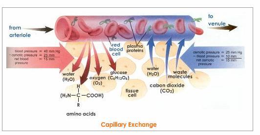 Diagram Below Depicts Transport Carbon Dioxide Blood Body Tissues
